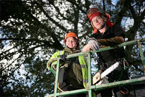 Tree Surgeon and Tree Preservation Orders
