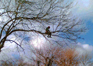 Tree Surgeon Wiltshire